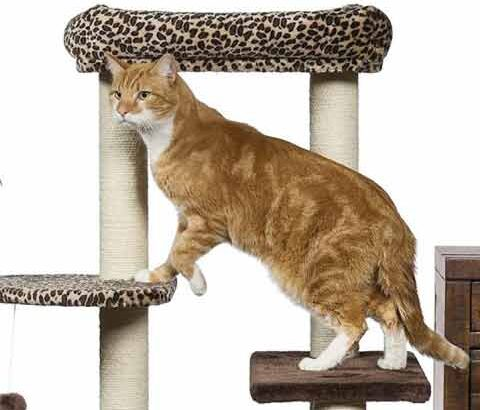 what is the best cat tree for large cats